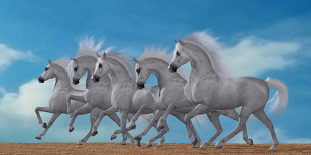 herd: Arabian Horse Herd - A herd of beautiful white Arabian horses in a wild desert environment.