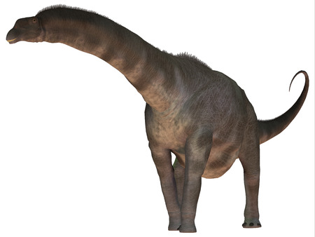 sauropod: Argentinosaurus sobre blanco - Argentinosaurus era un dinosaurio saur�podo titanosaurio de la �poca del Cret�cico de la Argentina. Foto de archivo