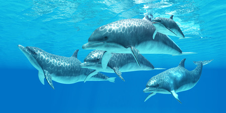 forage: Bottlenose Dolphin - Bottlenose dolphins live in a group called pods and forage the ocean for fish prey.