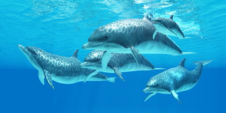 delfin: Tursiops - Bottlenose delfiny żyją w grupę o nazwie strąków i pasz na ocean dla drapieżnych ryb.