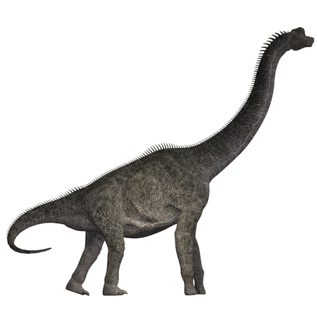 herbivorous: Brachiosaurus on White - Brachiosaurus was a herbivorous dinosaur that lived in the Jurassic Era of North America. Stock Photo