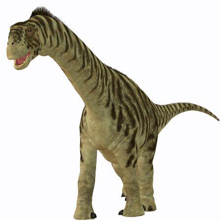 jurassic: Camarasaurus Juvenile on White - Camarasaurus was a sauropod herbivore dinosaur that lived in the Jurassic Era of North America.