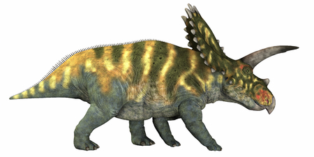 herbivore: Coahuilaceratops on White - Coahuilaceratops was a herbivore that lived in the Cretaceous Era of Mexico.