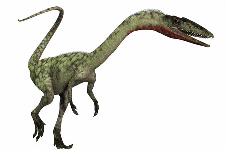 triassic: Coelophysis on White - Coelophysis was a bipedal predatory dinosaur that lived during the Triassic Period of North America. Stock Photo