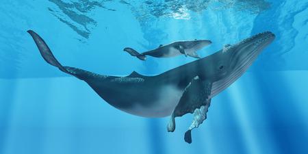 어머니 향유를 돌보는 - 세심한 향유 고래 어머니는 그녀의 송아지가 바다 표면 근처에서 그녀의 가까운 유지 확인합니다.