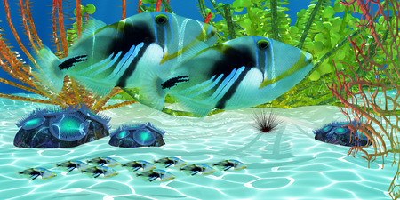 triggerfish: Triggerfish - Triggerfish parents watch over their baby fry young as they swim along a coral reef.