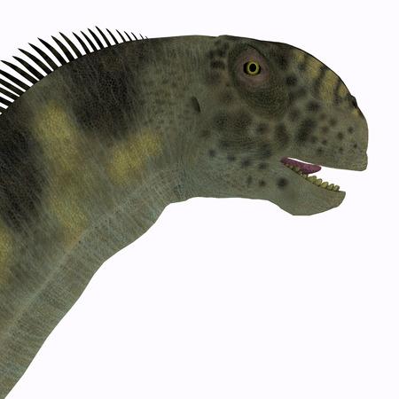 sauropod: Camarasaurus Head - Camarasaurus era un dinosaurio saur�podo herb�voro que vivi� durante la �poca del Jur�sico de Am�rica del Norte. Foto de archivo