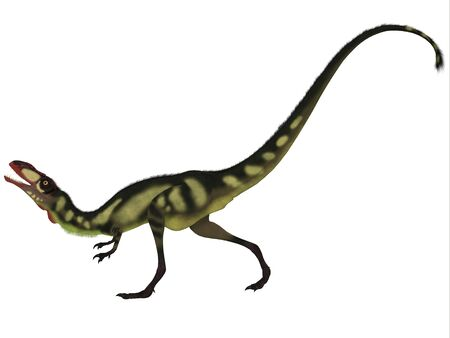 carnivorous: Dilong Dinosaur on White - Dilong was a small carnivorous dinosaur that lived in the Cretaceous Era of China.