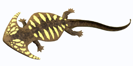 ectothermic: Diplocaulus Permian Amphibian - Diplocaulus is an extinct amphibian from the Cambrian to the Permian Eras that lived in North America.