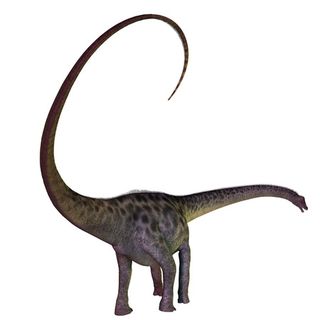 diplodocus: Diplodocus on White - Diplodocus was a herbivorous sauropod dinosaur that lived in the Jurassic Period of North America.