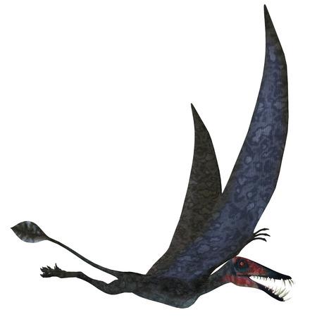Dorygnathus Pterosaur over White - Dorygnathus was a carnivorous Pterosaur that lived in the Jurassic Era of Europe. photo