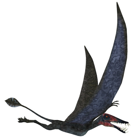 pterodactyl: Dorygnathus Pterosaur over White - Dorygnathus was a carnivorous Pterosaur that lived in the Jurassic Era of Europe.