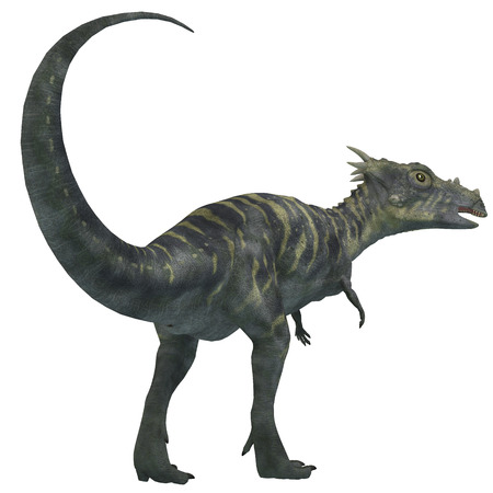 biped: Dracorex Dinosaur on White - Dracorex was a herbivorous dinosaur that lived in the Cretaceous Period of North America.