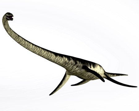 Elasmosaurus Reptile on White - Elasmosaurus was a plesiosaur marine reptile that lived in the Cretaceous Period of Kansas in North America.