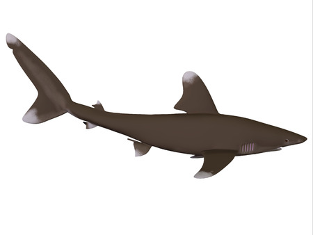 oceanic: Oceanic Whitetip Shark Profile - The Oceanic whitetip shark is a large predatory fish with rounded fins that inhabits tropical and warm temperate seas.