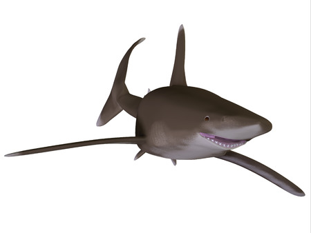 inhabits: Oceanic Whitetip Shark - The Oceanic whitetip shark is a large predatory fish with rounded fins that inhabits tropical and warm temperate seas.