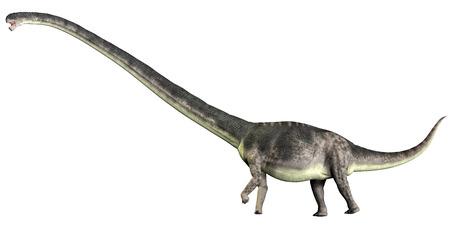 sauropod: Omeisaurus en blanco - Omeisaurus es un dinosaurio saur�podo herb�voro que vivi� en el Per�odo Jur�sico de China. Foto de archivo