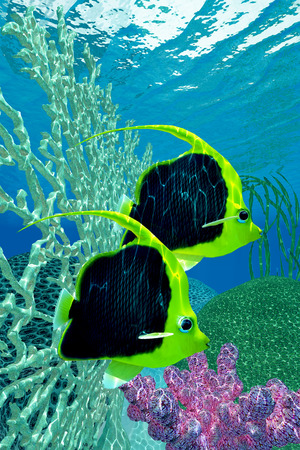 plancton: Bander�n Coralfish - El Bander�n Coralfish es un pez sociales encontrado en bancos de arrecifes del oc�ano y es principalmente un comedor de plancton.