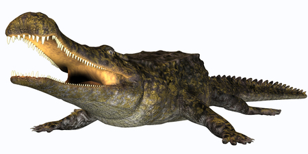 Sarcosuchus Reptile - Sarcosuchus is an extinct genus of carnivorous crocodile that lived in the Cretaceous Period of Africa.