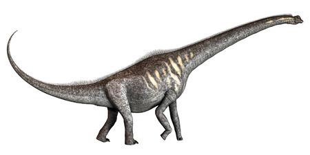 Sauroposeidon on White - Sauroposeidon was a herbivorous sauropod dinosaur that lived in the Cretaceous Period of Oklahoma in North America.