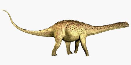 Uberabatitan Dinosaur on White - Uberabatitan was a herbivorous sauropod dinosaur that lived in the Cretaceous Period of Brazil.