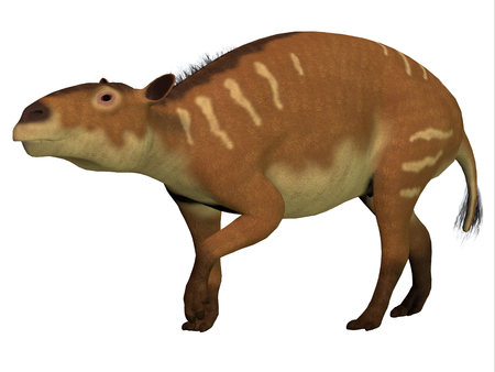 forerunner: Eurohippus over White - Eurohippus is the herbivorous forerunner of the horse that lived in the Eocene Period in tropical jungles of Europe.