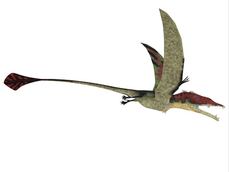 pterodactyl: Eudimorphodon over White - Eudimorphodon was a predatory flying reptile that lived in the Triassic Period and found in Italy.