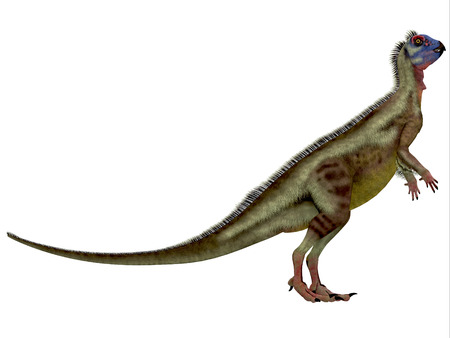 cretaceous: Hypsilophodon over White - Hypsilophodon was an omnivorous dinosaur that lived in the Cretaceous Period of England. Stock Photo