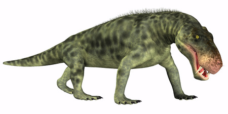 lived: Inostrancevia Reptile on White - Inostrancevia was a carnivorous reptile dinosaur that lived in the Permian Age of Russia.