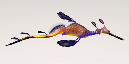 Leafy Seadragon - The Leafy Seadragon dont have any teeth and suck their food down their tube snouts.