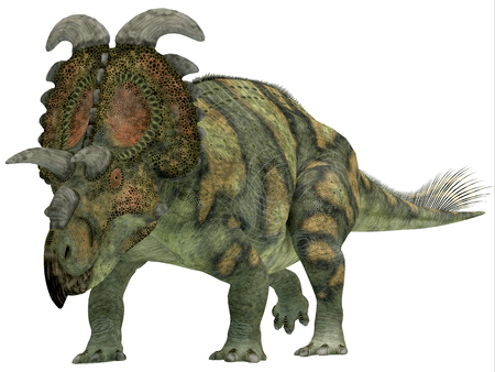 gigantic: Albertaceratops over White - Albertaceratops was a herbivorous dinosaur that lived in Upper North America in the Cretaceous Period. Stock Photo