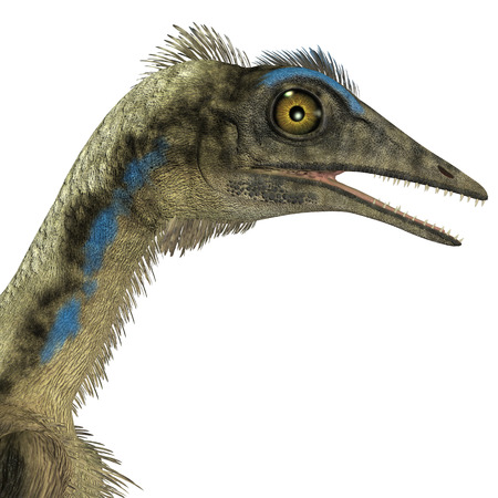 mesozoic: Archaeopteryx Dinosaur Head - Archaeopteryx was a reptile carnivorous bird that lived in the Jurassic Age of Germany.