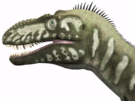 Bistahieversor Dinosaur Head - Bistahieversor was a carnivorous dinosaur that lived in the Cretaceous Period of New Mexico.