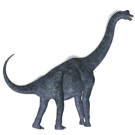 sauropod: Brachiosaurus sobre blanco - Brachiosaurus era un dinosaurio saur�podo herb�voro que vivi� en la era jur�sica de Am�rica del Norte. Foto de archivo