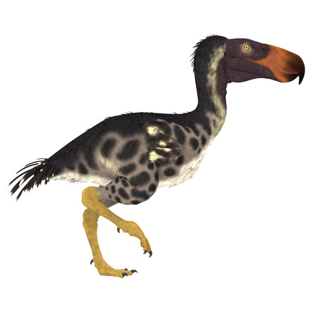 flightless: Kelenken Bird over White - The Kelenken Terror Bird of Argentina was a flightless carnivore that lived in the Miocene Period.