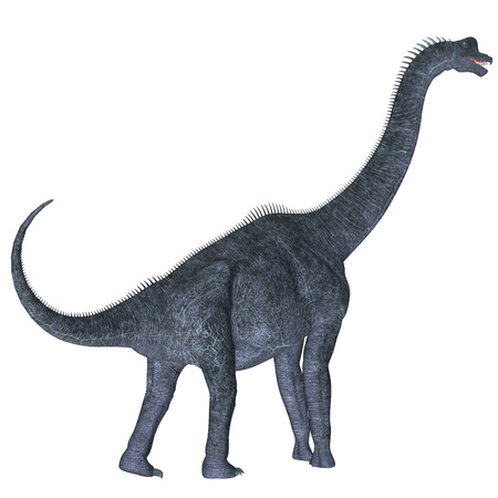 behemoth: Brachiosaurus over White - Brachiosaurus was a herbivorous sauropod dinosaur that lived in the Jurassic Age of North America. Stock Photo