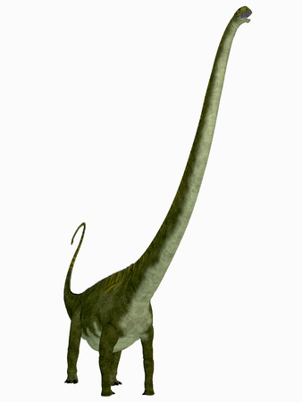 sauropod: Mamenchisaurus hochuanensis Dinosaur  Mamenchisaurus was a herbivorous sauropod dinosaur that lived in the Jurassic Period of China. Stock Photo