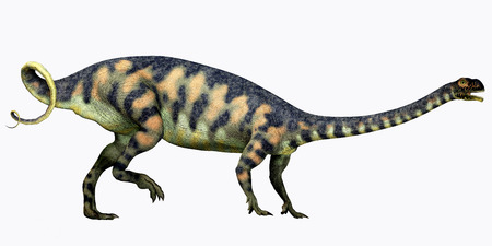 jurassic: Massospondylus on White  Massospondylus was a herbivorous prosauropod dinosaur that lived during the Jurassic Period of South Africa.