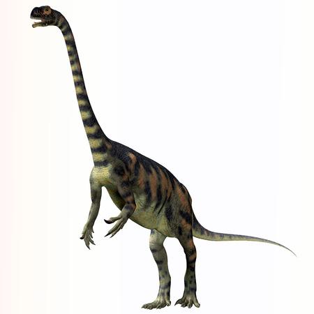 Massospondylus over White  Massospondylus was a herbivorous prosauropod dinosaur that lived during the Jurassic Period of South Africa.