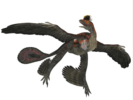cretaceous: Microraptor Dinosaur Profile  Microraptor was a flying dinosaur reptile and lived in China and Mongolia in the Cretaceous Periods.