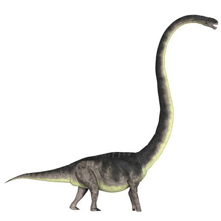 vertebrates: Omeisaurus over White  Omeisaurus was a herbivorous dinosaur that lived in the Jurassic Period of China.