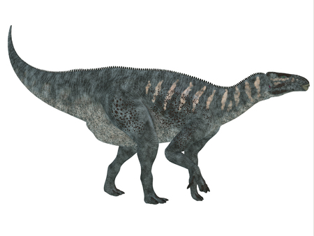herbivorous: Iguanodon Side Profile   Iguanodon was a herbivorous dinosaur that lived in Europe during the Cretaceous Period.