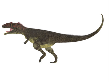 carnivore: Mapusaurus Side Profile   Mapusaurus was a giant carnivorous theropod dinosaur that lived during the Cretaceous Period of Argentina.