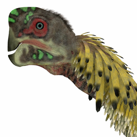 omnivorous: Citipati Dinosaur Head   Citipati was a omnivorous theropod dinosaur that lived in Mongolia during the Cretaceous Period.