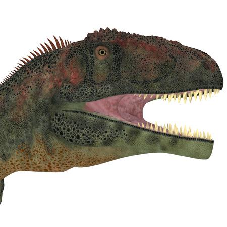 vertebrates: Mapusaurus Dinosaur Head    Mapusaurus was a giant carnivorous theropod dinosaur that lived during the Cretaceous Period of Argentina.