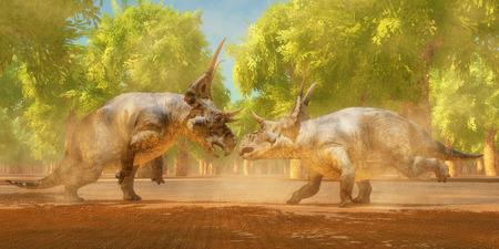 dinosauro: Diabloceratops Dinosaur combattere due Diabloceratops dinosauri lotta per i diritti di accoppiamento durante il periodo Cretaceo di Utah Nord America. Archivio Fotografico