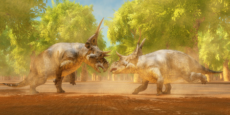 mating: Diabloceratops Dinosaur Fight    Two Diabloceratops dinosaurs fight for mating rights during the Cretaceous Period of Utah North America. Stock Photo