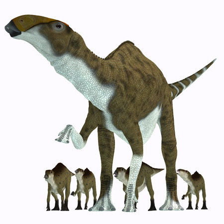 herbivore: Brachylophosaurus Herbivore Dinosaur   Brachylophosaurus was a herbivorous hadrosaur dinosaur that lived during the Cretaceous Period of Alberta Canada and Montana North America. Stock Photo