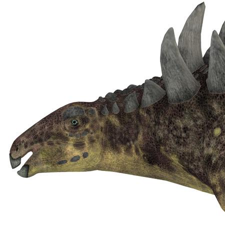 vertebrates: Hungarosaurus Dinosaur Head   Hungarosaurus was an ankylosaur herbivorous dinosaur that lived in Hungary during the Cretaceous Period.