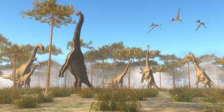 jurassic: Brachiosaurus Browsing   Brachiosaurus was a herbivorous sauropod dinosaur that lived in the Jurassic Age of North America. A Brachiosaurus herd browse on tree tops as a flock of Pterodactylus flying reptiles fly overhead.